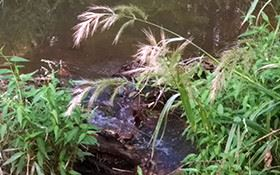 water flowing through grass